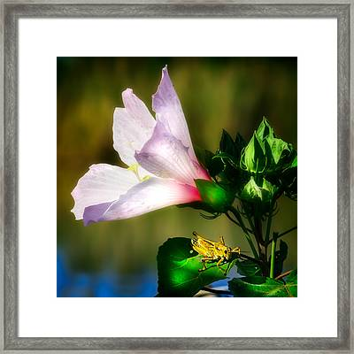 Grasshopper And Flower Framed Print by Mark Andrew Thomas