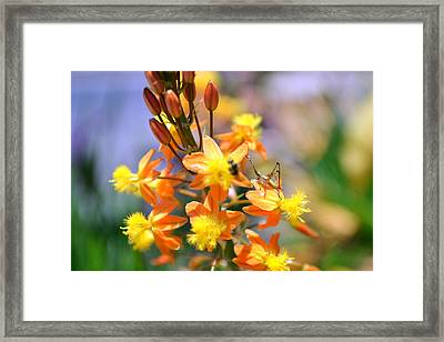 Grasshopper And The Bee Framed Print by Ashley Fortier