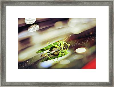 Grasshopper Disco Framed Print by Gynt
