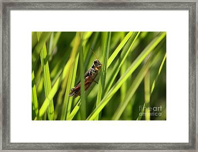 Grasshopper In Grass Framed Print