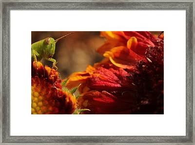 Grasshopper In The Marigolds Framed Print by Joel Loftus