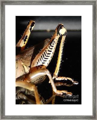 Grasshopper Legs Framed Print by Nola Hintzel