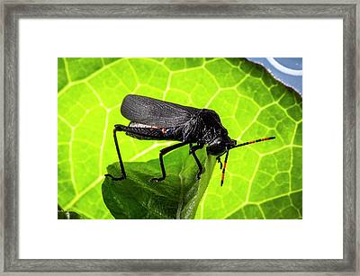 Grasshopper On A Leaf Framed Print by Philippe Psaila
