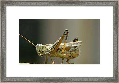 Grasshopper On His Way Out Framed Print by David  Ortiz