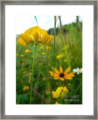 Grasshopper On Yellow Flower Framed Print