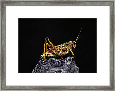 Grasshopper Portrait. Blue Cypress Lake Framed Print