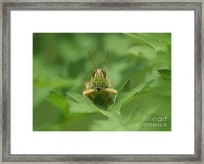 Framed Print featuring the photograph Grasshopper Portrait by Olga Hamilton