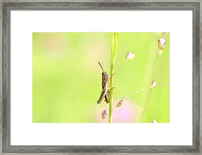 Grasshopper  Framed Print by Tommytechno Sweden