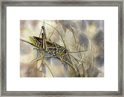 Grasshopper Watercolor Framed Print