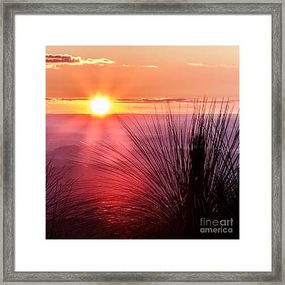 Grasstree Sunset Framed Print by Peta Thames