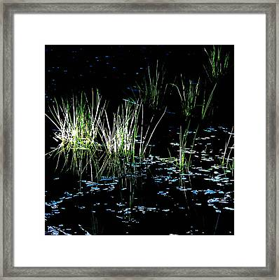Framed Print featuring the photograph Grassy Lights by Suzy Piatt