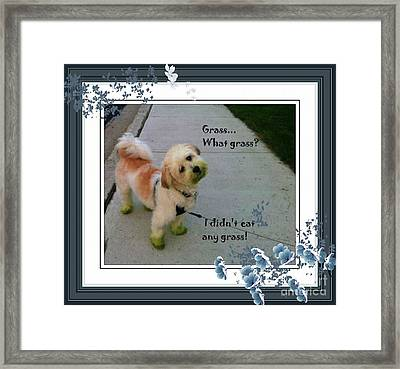 Grassy Puppy Framed Print by Barbara Griffin