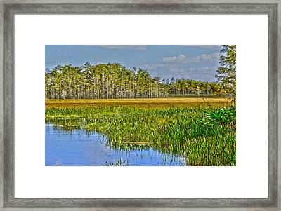 Grassy Waters Framed Print
