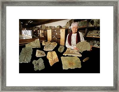 Grauvogel-gall Fossil Collection Framed Print