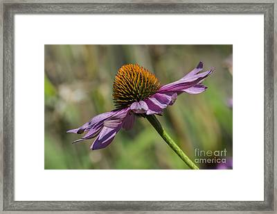 Gravity... Framed Print