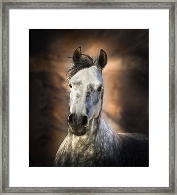 Gray Arabian Horse Framed Print by Linda Sherrill