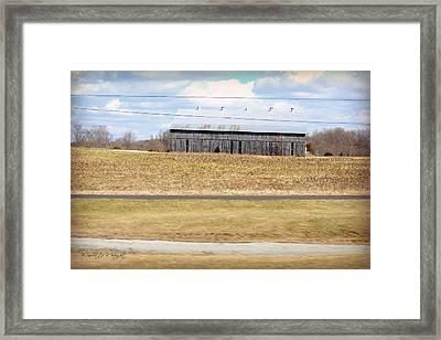 Gray Barn In A Cornfield Framed Print by Paulette B Wright