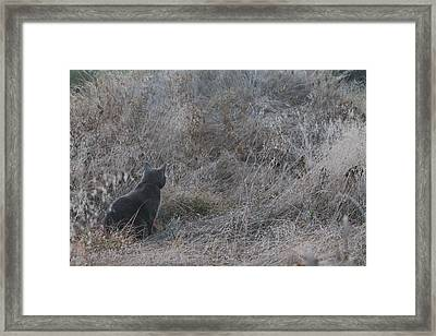 Framed Print featuring the photograph Gray Cat by Alicia Knust