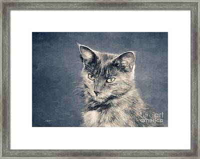 Gray Cat Framed Print by Jutta Maria Pusl