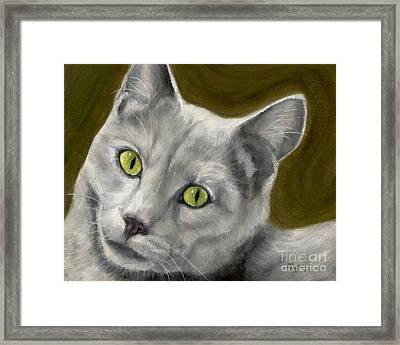 Gray Cat With Green Eyes Framed Print by Amy Reges