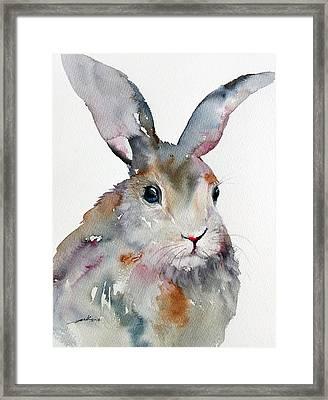 Gray Hare Framed Print