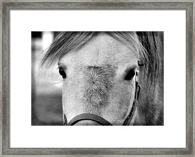 Gray On Gray Framed Print by JAMART Photography