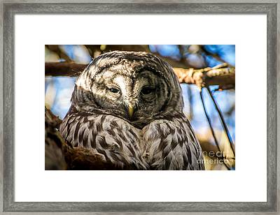 Gray Owl Framed Print