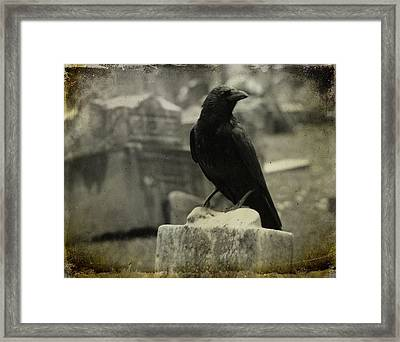 Gray Rainy Day Raven In Graveyard Framed Print