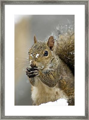 Gray Squirrel - D008392  Framed Print by Daniel Dempster