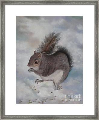 Gray Squirrel Framed Print by Jackie Hill