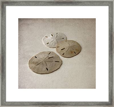 Gray Taupe And Beige Sand Dollars Framed Print by Brooke T Ryan