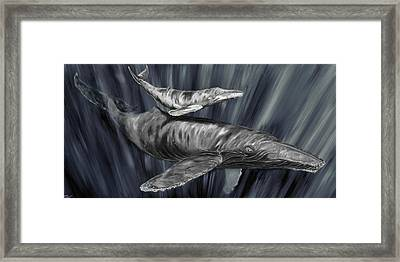 Gray Whales Framed Print