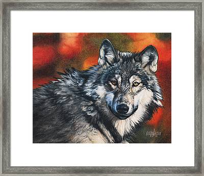 Gray Wolf Framed Print by Joshua Martin