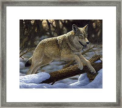Gray Wolf - Just For Fun Framed Print