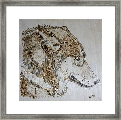 Gray Wolf Pyrographic Wood Burn Original 5.75 X 5.75 Inch Art Panel Framed Print by Shannon Ivins