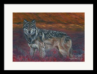 Timber Wolf Pics Framed Prints