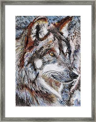 Gray Wolf Watches And Waits Framed Print