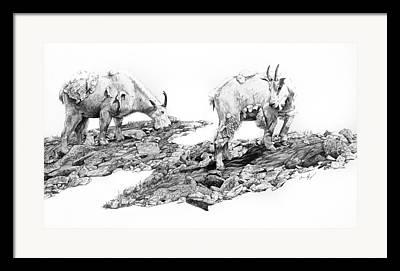 Tali Drawings Framed Prints