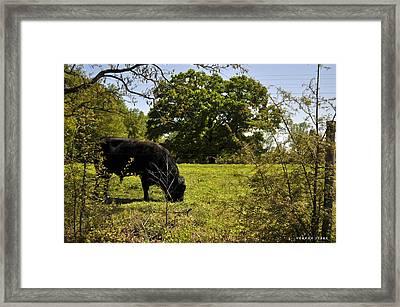 Grazing Alabama Framed Print