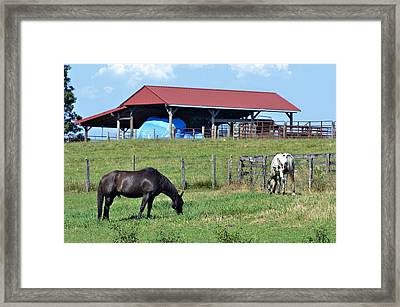 Grazing Below The Shed Framed Print
