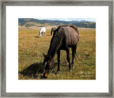 Grazing Buddies Framed Print by Claudette Bujold-Poirier