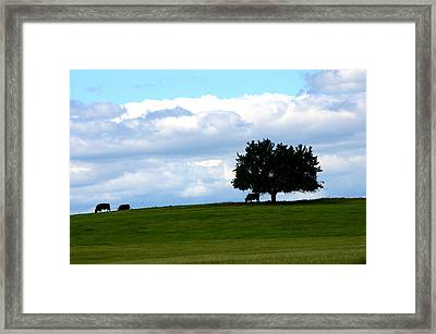 Framed Print featuring the photograph Grazing by Cathy Shiflett