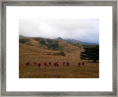 Grazing Cattle Framed Print by Jeff Lowe