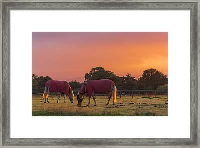 Grazing Framed Print by Chris Fletcher