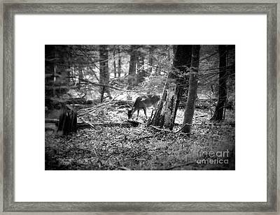 Grazing Deer Framed Print