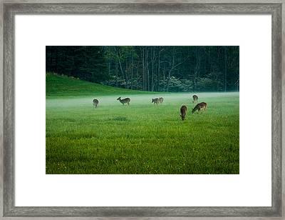 Grazing Deer Framed Print