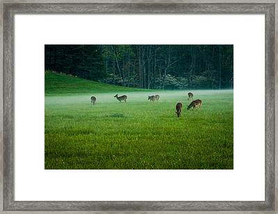 Grazing Deer Framed Print by Jay Stockhaus