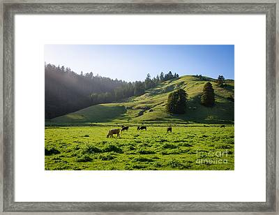 Framed Print featuring the photograph Grazing Hillside by CML Brown