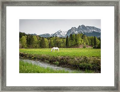 Grazing Horse In Pasture In Bavarian Framed Print by Sheila Haddad
