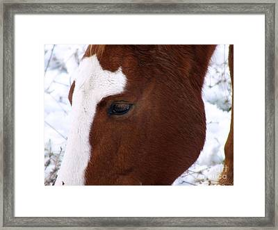 Grazing Horse  Framed Print by Kimberly Maiden